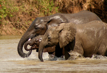Selous Elephants4